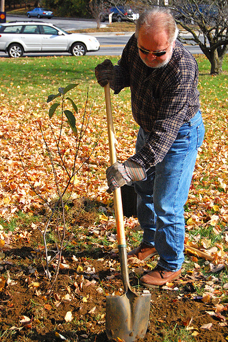 old man planting a tree