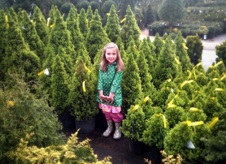 tree nurseries, garden centers, botanical gardens